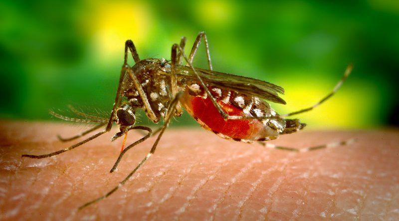 Penyakit disebabkan nyamuk mengancam dunia