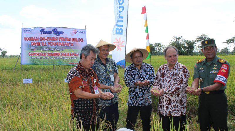 BULOG Divre Yogyakarta Laksanakan Panen Raya Padi