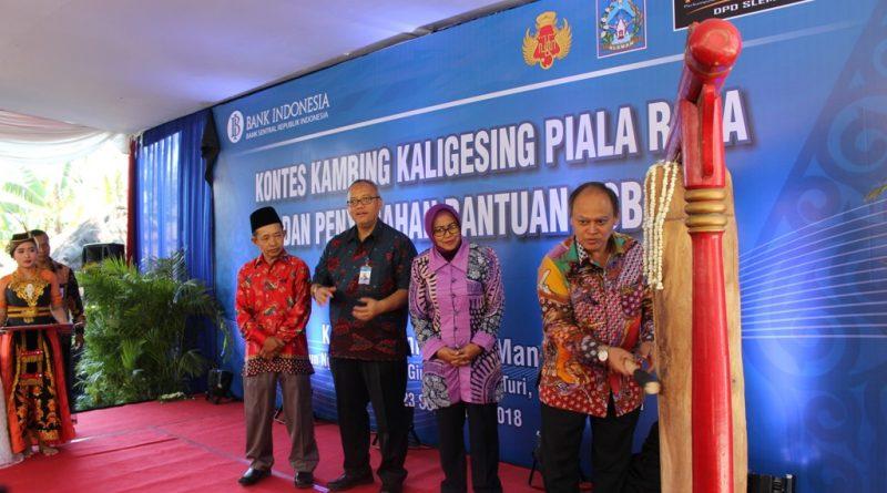 Kadinas Pertanian DIY Buka Acara Kontes Kambing Etawa Piala Raja